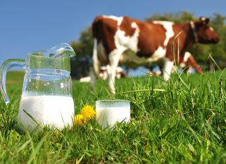 Revenue rise for Arla during 'rare stability' in dairy market