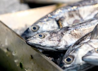 Turbulent tides for UK fishing, warns Yorkshire & Humber MEP